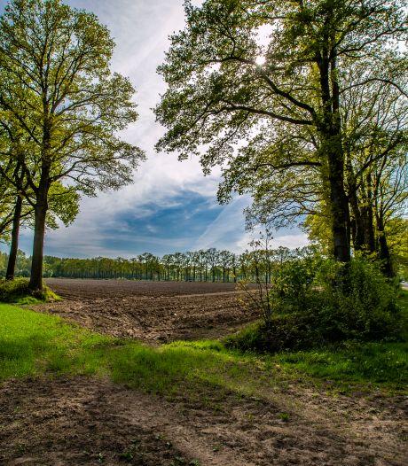 Lochem steekt half miljoen euro in speciaal onderhoud van 52.000 karakteristieke laanbomen