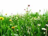 Sam Gooris had gelijk: laat het gras maar groeien