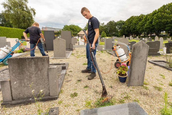 Bestrijding van het onkruid op de begraafplaats in Vollenhove.