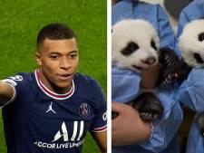 Kylian Mbappé parrain d'un des deux bébés pandas nés dans un zoo en France