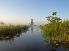 Zo moet de Nieuwkoopse Plassen gered worden van de stikstofdood: 'Anders hou je geen biodiversiteit over'