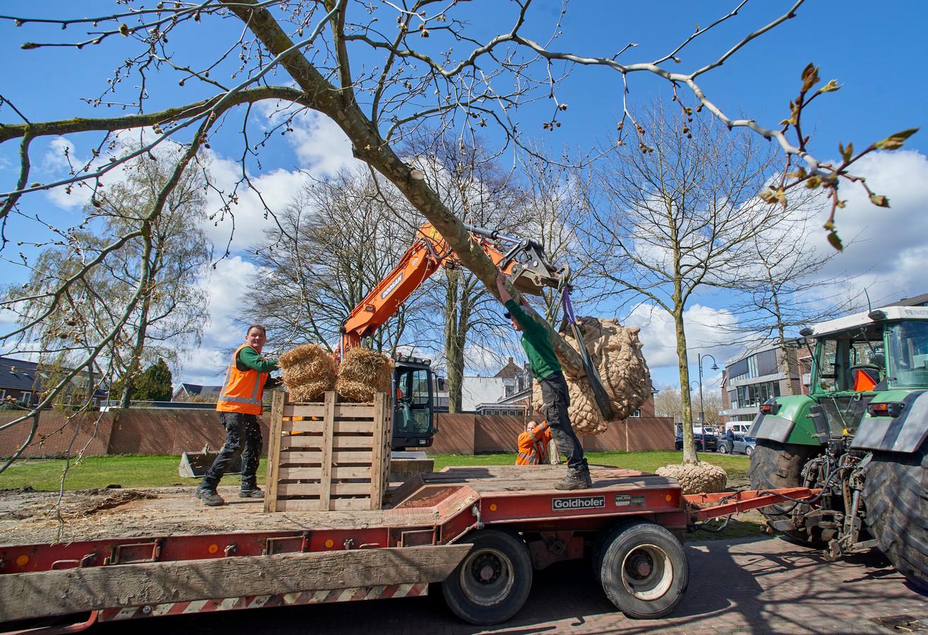 De bomen bij de parkeerplaats aan de Hoogstraat in Veghel worden verwijderd door Vogels Groenvoorziening.