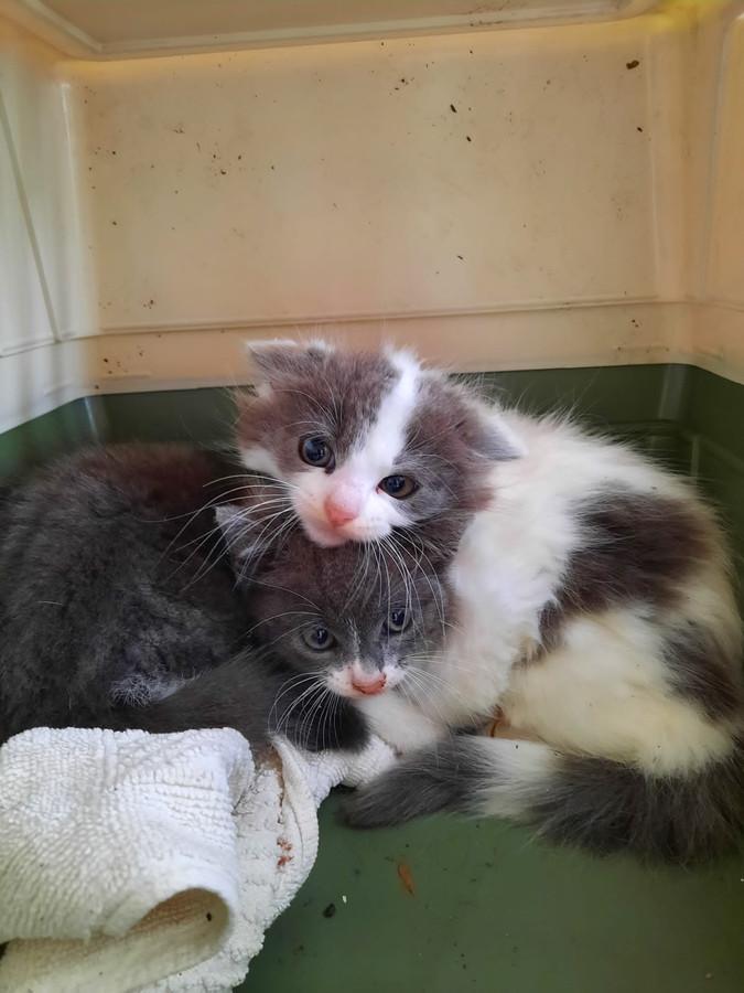 De kittens maken het goed na hun avontuur in het centrum van Emmeloord.