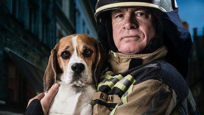 """""""Komend oudjaar blijf ik bij mijn hondje"""": brandweerman trekt aan alarmbel inzake vuurwerk"""