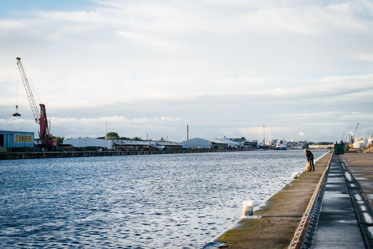 De Gentse haven fuseert binnenkort met Zeeland Seaports, als nog enkele financiële knopen doorgehakt geraken. Beeld Wouter Van Vooren