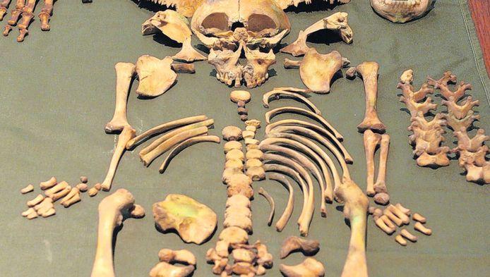 Archeologen troffen in de Goudse Sint-Janskerk ook skeletten van jonge kinderen aan, zoals hier van een 2-jarige. De kindersterfte was erg hoog in de 16de en 17de eeuw.