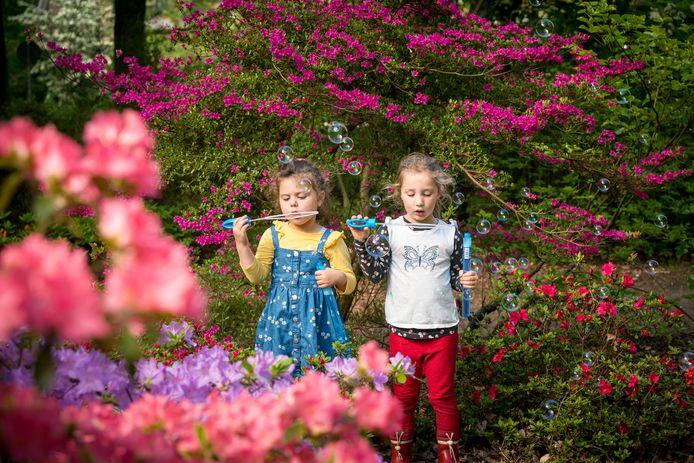 Bellen blazen tussen de bloeiende rododendrons is het Belmonte Arboretum in Wageningen.