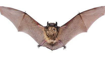 Vleermuizen ontdekken in Sterrebos