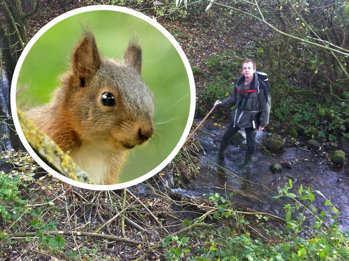 De populatie van de eekhoorn loopt terug, maar in dorpen en steden is de dichtheid juist groter dan in het bos.