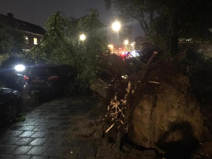 Omgewaaide boom op Kerstroosplein in Eindhoven
