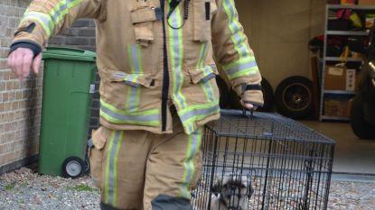 Hond gered uit met rook gevuld huis