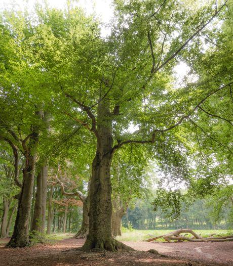Utrechtse 'Boom van het Jaar' vertelt bijzonder verhaal over liefde, familie en vriendschap