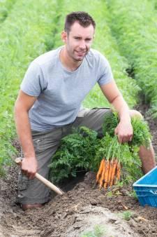Boeren Voorne-Putten: 'blij dat we weer aan de slag kunnen'