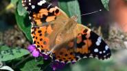 Op zoek naar vlinders en libellen in Bastion VIII