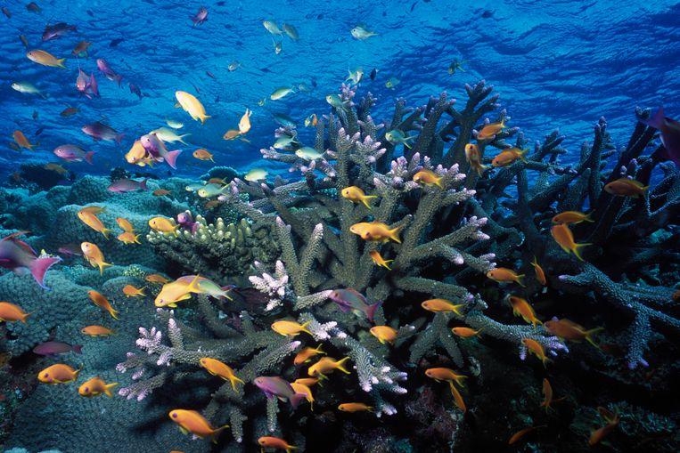 Het Great Barrier Reef. Beeld VWPics/Universal Images Group vi