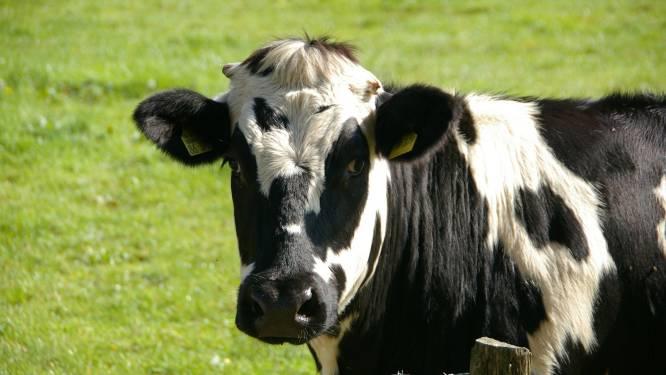 Gemeente roept veehouders op tot extra aandacht voor weidedieren
