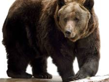 Voor eerst in moderne geschiedenis: beer doodt man (57) in Slowakije