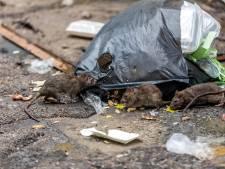 Rattenplaag in Crabbehof: 'Brrr, dat parkje durf ik niet meer in'