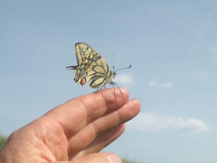 Via een slingerpaadje is de vlindertuin straks bereikbaar.