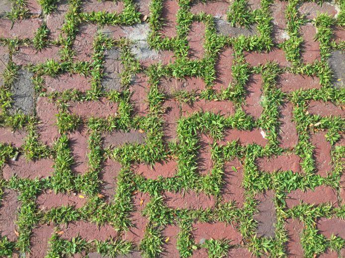 Zo ziet Marja Middeldorp het graag: groene voegen tussen de stenen van het terras of het tuinpad.