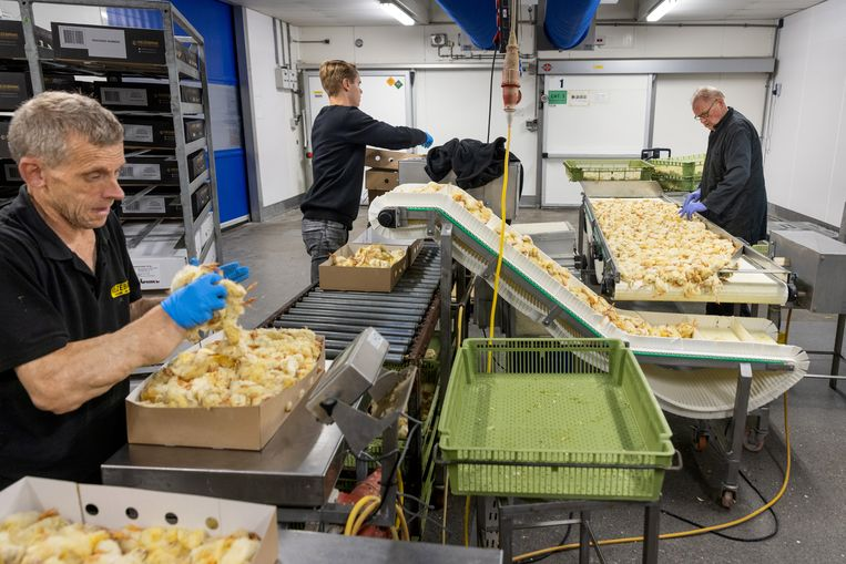Kiezebrink levert voer voor dierentuinen: kuikens, muizen, vissen, konijnenkoppen, ganzen en nog veel meer. Beeld Herman Engbers