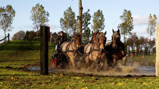 Tweede editie van Trekpaardenwedstrijd: 'Vooral hindernisbaan is spectaculair om te zien'