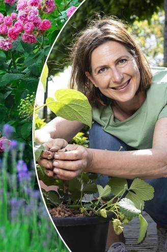 Voeding helpt je planten langer bloeien en maakt ze klaar voor de winter: tuinexperte legt uit welk product past bij welke soort