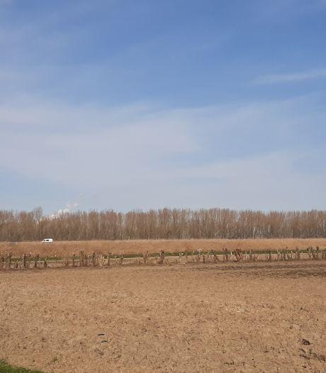 Bomenkap Oranjepolder: 'We wachten het rapport af'