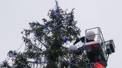 Stad Genk al op zoek naar kerstbomen
