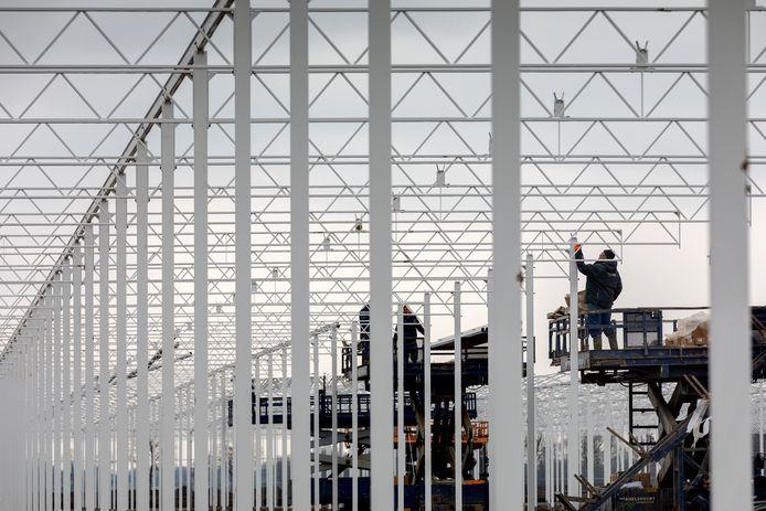 De bouw van de mega-aardbeienkas in Zuilichem.