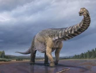 Enorme titanosaurus in Australië blijkt nieuwe dinosaurussoort te zijn