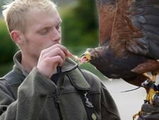 Tentoonstelling in Voorlinden geopend met roofvogelshow