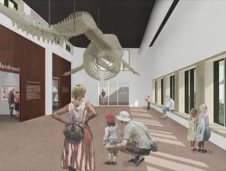 """""""Skelet van 2 ton aan het plafond"""": potvis Valentijn pronkt vanaf 2023 in vernieuwd Visserijmuseum"""