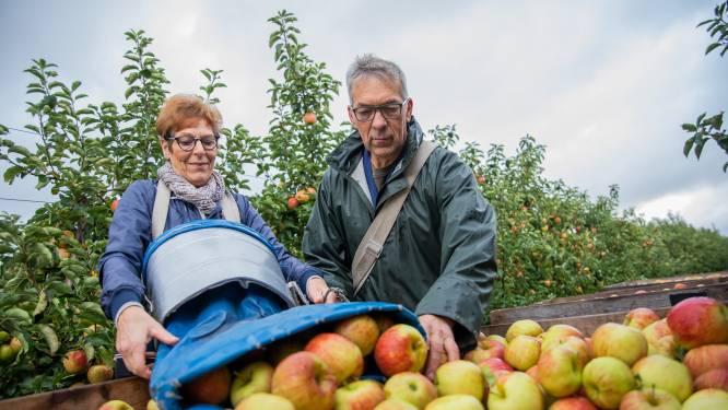 Een goed jaar voor de Jonagold-appels, met dank aan de Schelde
