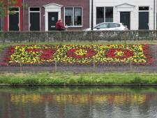 Begonia's fleuren jubilerend Culemborg op