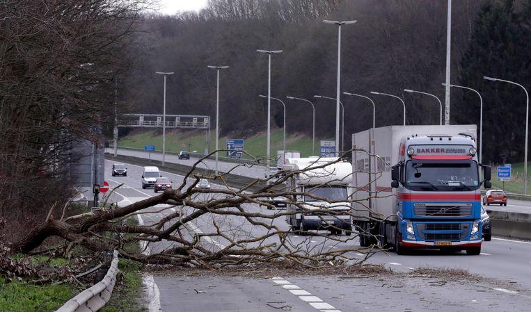 Op de snelweg tussen Brussel en Luxemburg verspert een boom meerdere rijstroken. Beeld EPA