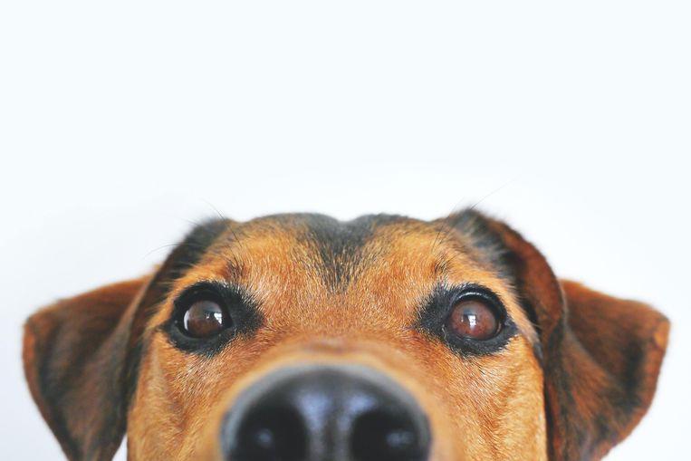 Déze hond past het beste bij jouw sterrenbeeld Beeld Pexels