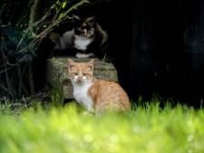 Dalfsen ziet geen wettelijke basis voor 'kattenbeleid'