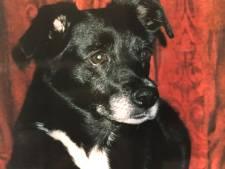 Na jaarlijkse borrel nu ook boek voor overleden hond Flipse