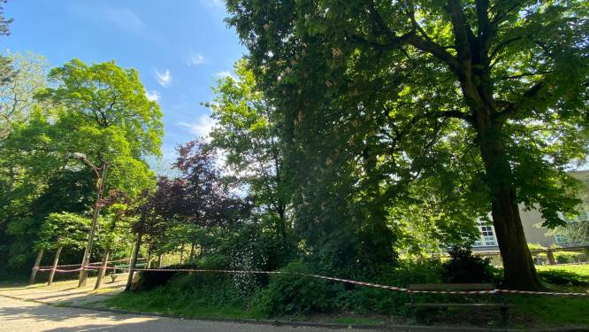 Gesnoeide kastanjeboom vormt geen gevaar meer, zomerbar Monterey mag eindelijk open