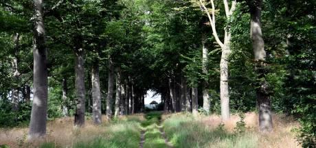 Turfvaart, kilometers lanen vol beuken en eiken: de Oude Buisse Heide floreert weer