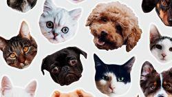 Lifestyle-update: vereeuwig je huisdier op een sticker & andere nieuwtjes