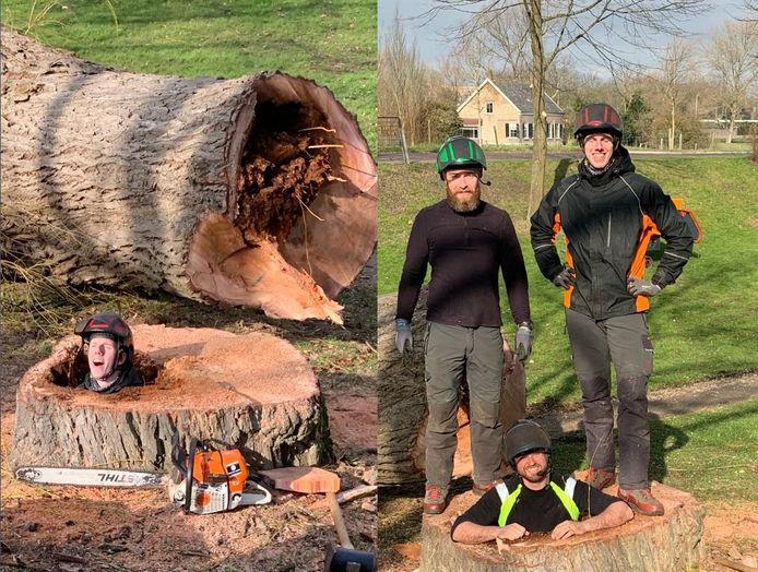 De boom was helemaal rot van binnen. Het gat ging zo diep de grond in de mannen die hem hadden gekapt erin konden gaan staan.