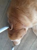 De hond ligt zoals altijd strak tegen mijn stoelpoot.