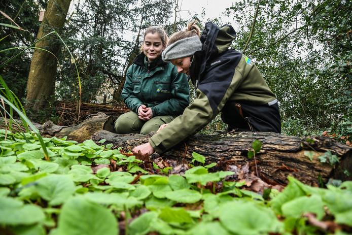 """De voorjaarszonnebloem groeit al flink in de tuin bij Stadsboerderij Weizigt. ,,Meestal bevriest deze plant in de winter"""", vertelt Teddy Hufken (rechts)."""