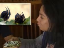 Restaurant serveert taco met spin en schorpioen