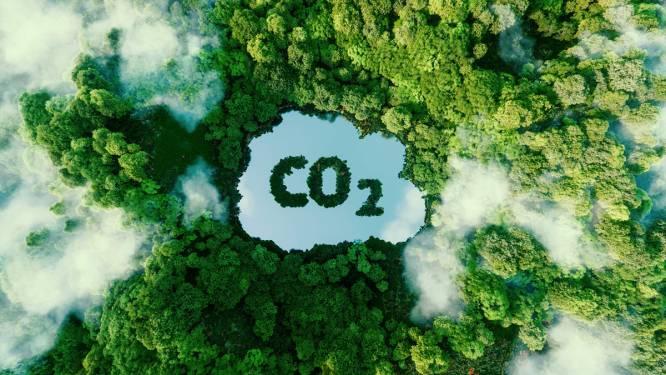 Professoren geven uitleg over opname van CO2 door planten en bodem op MiNa-raad: stream live te volgen op YouTube