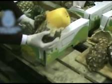 Politie onderschept 745 kilo cocaïne in ananassen