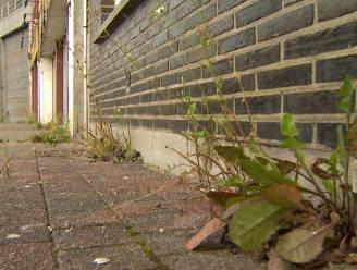 Gemeente gaat eigen groendienst oprichten nu onkruid zo snel groeit