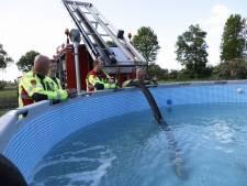 Drama in Lierderholthuis: vlammenzee verwoest café, woning gered met bluswater uit zwembad